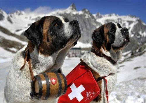 Mercato Libero Capitali In Svizzera Nel Minor Tempo