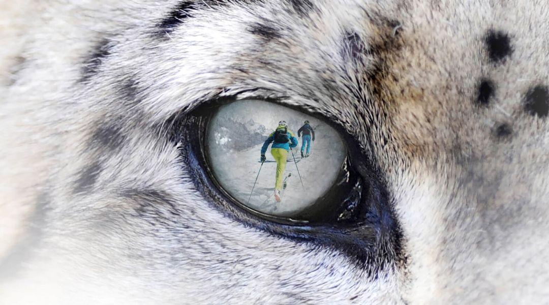 Il 29 febbraio torna Snow Leopard Day a Spiazzi di Gromo