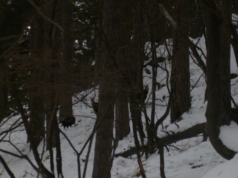 Ecco cosa so può vedere camminando nel Parco Orsiera Rocciavrè