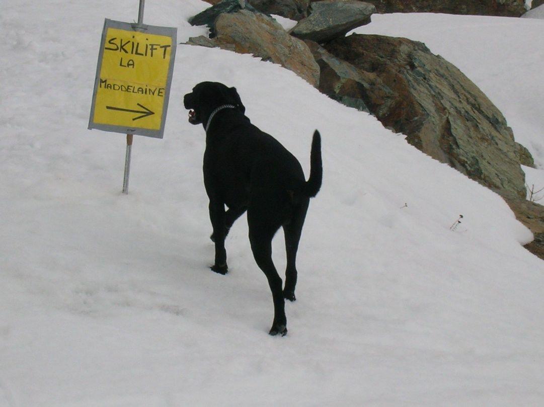 Lo skilift ...? meglio il sentiero battuto!
