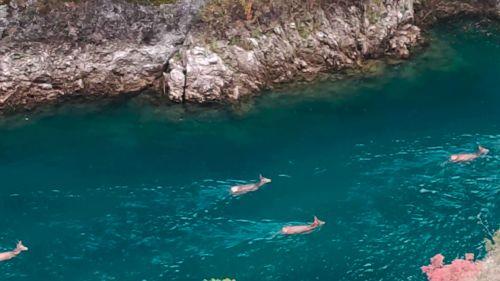 Spettacolo d'Abruzzo: ultima nuotata di stagione per i cervi di Villalago