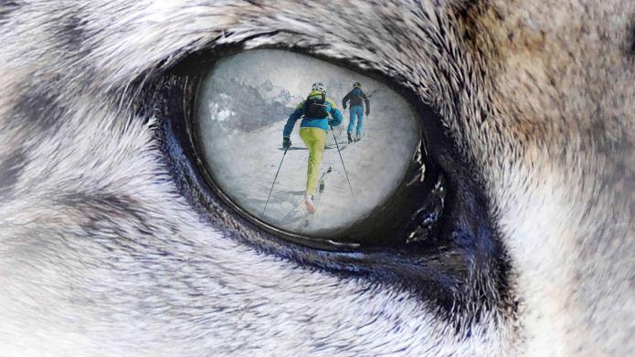 Il 2 Marzo a Misurina (BL) si scia per salvare il Leopardo delle nevi.