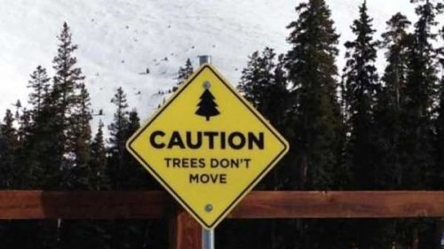 caution tree dont move