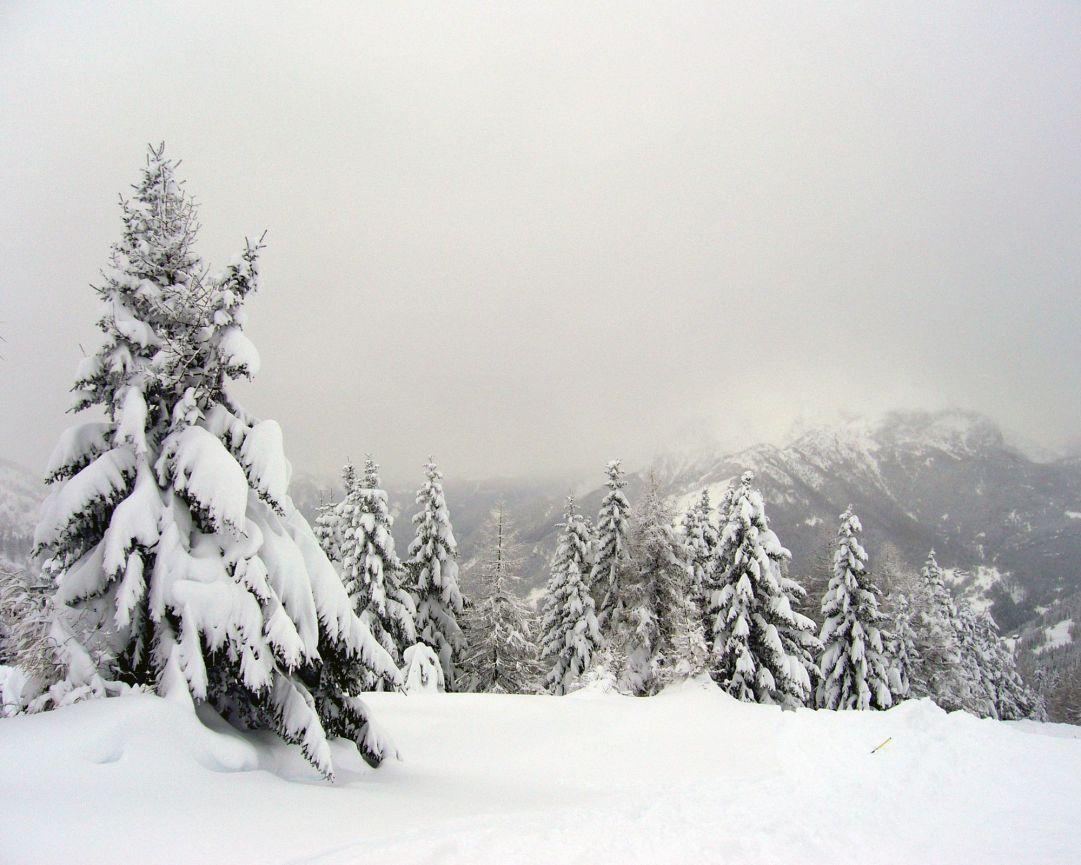 Alberi pieni di neve e nuvole basse
