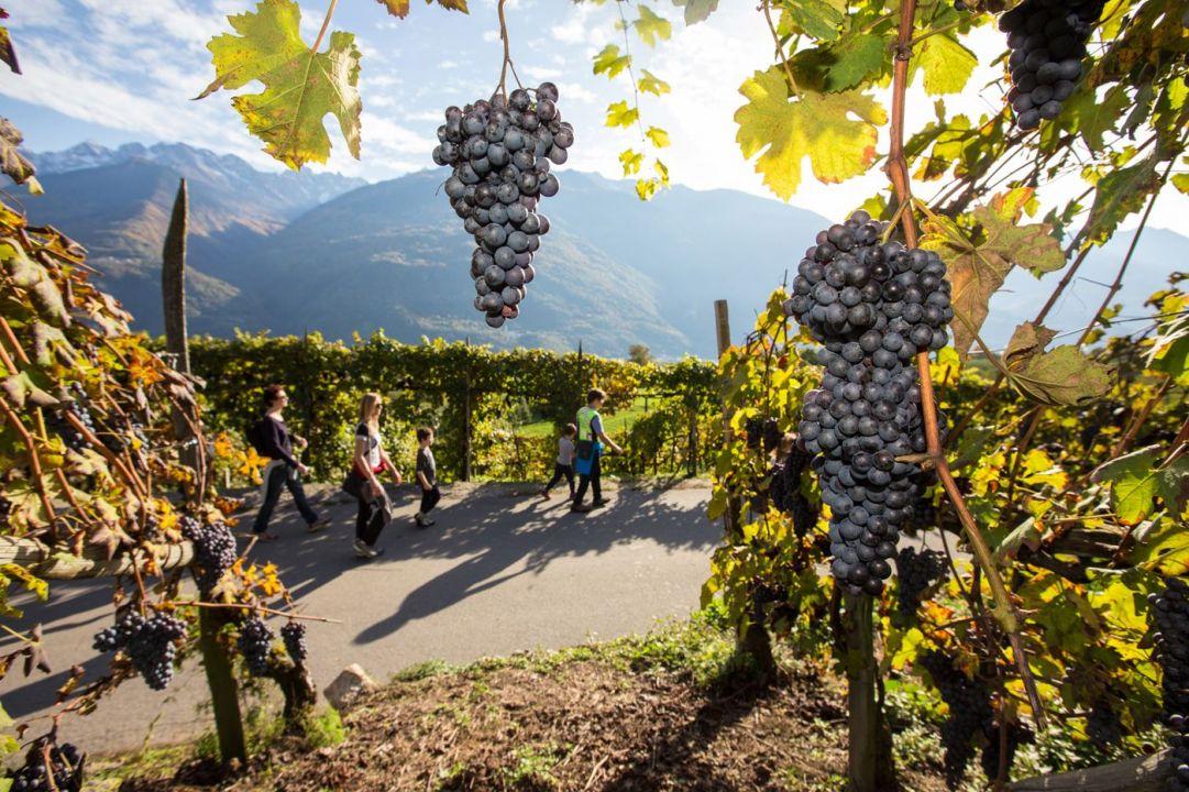 vini e vitigni di Valtellina