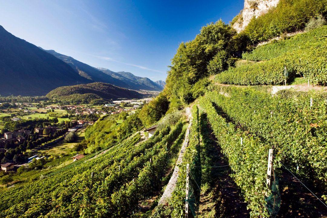 Canine aperte 2016: un'occasione per conoscere i vini delle Alpi