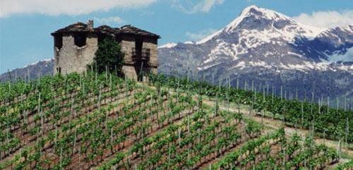 Valle d'Aosta DOC: un nome per un panorama vinicolo variegato