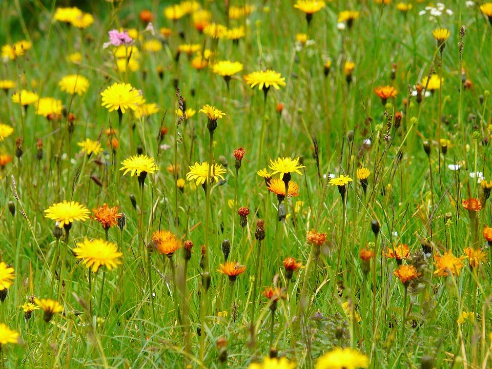 Le erbe spontanee del Trentino: tra natura e tradizione