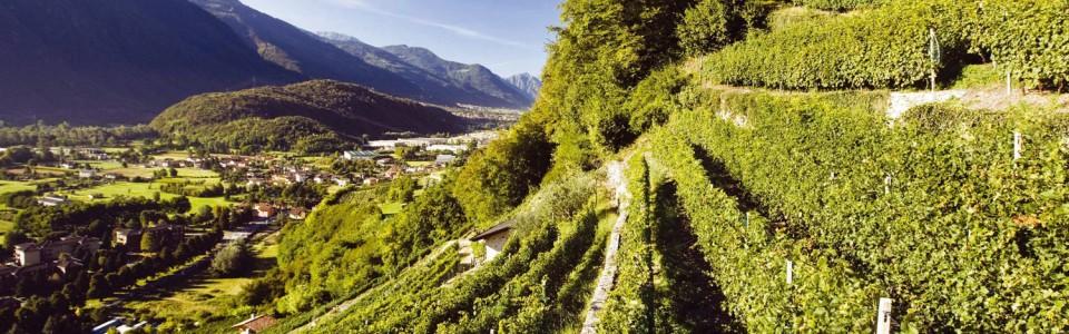 Valle Camonica: la viticoltura di montagna è patrimonio dell'umanità